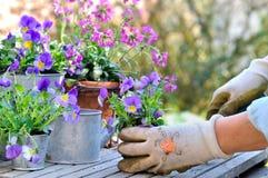 种植在罐的花 库存照片