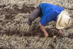 种植在领域的农夫检查 库存图片