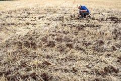种植在领域的农夫检查 免版税库存图片