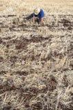 种植在领域的农夫检查 免版税库存照片