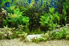 种植在水族馆 库存照片