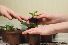 种植室内植物的妈妈和女儿 免版税库存照片