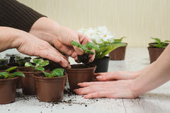 种植室内植物的妈妈和女儿 免版税图库摄影