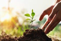种植小树的孩子的手在有日落的庭院里 浓缩 库存照片