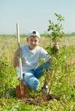 种植少年结构树的男孩 图库摄影