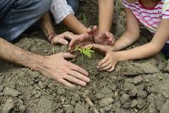 种植幼木的有机农夫家庭  图库摄影