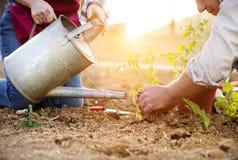 种植幼木的资深夫妇 免版税库存图片