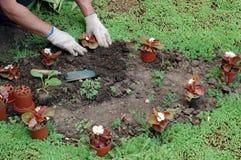 种植幼木 免版税库存照片