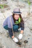 种植新的树的亚洲妇女 库存照片