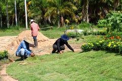 种植新的草皮草的工作者 免版税库存照片