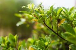 种植有水下落的叶子,软的焦点 图库摄影