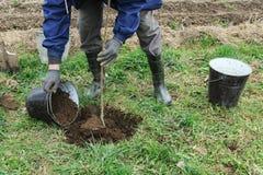 种植果树 免版税图库摄影