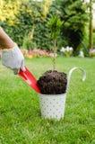 种植树在开花的庭院里 免版税库存照片