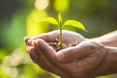 种植树树关心救球世界,手保护幼木本质上和晚上的光 免版税库存图片