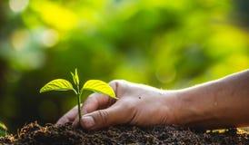 种植树树关心救球世界,手保护幼木本质上和晚上的光 免版税图库摄影