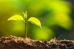 种植树树关心救球世界,手保护幼木本质上和晚上的光 免版税库存照片