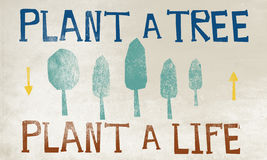 种植树环境概念的森林保护 免版税库存照片