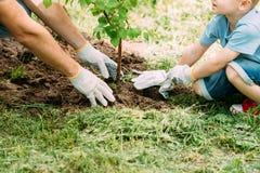 种植树的父亲和儿子的播种的图象 库存图片