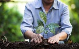 种植树自然本底厂咖啡幼木以新鲜自然的绿色 免版税库存图片
