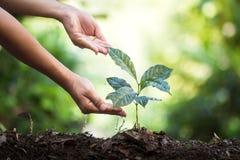 种植树自然本底厂咖啡幼木以新鲜自然的绿色 库存图片