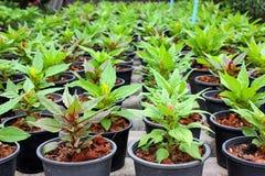 种植树 免版税库存图片