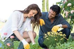 种植植物的夫妇在庭院里 免版税图库摄影