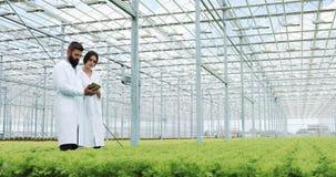 种植沙拉水栽法方法自温室 两名实验员审查生长与片剂的嫩绿的植物 影视素材