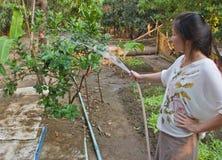 种植浇灌的妇女 免版税库存图片