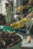 种植淡紫色植物的女孩 免版税库存照片