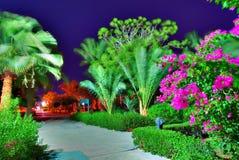 种植热带 库存图片