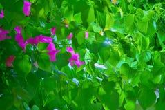 种植热带 库存照片
