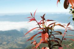 种植生长在一座自然山,美丽的天空 免版税库存照片