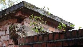 种植生长在墙壁上 股票录像
