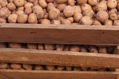 种植的土豆 免版税图库摄影