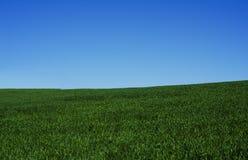 种植的麦子,农业,领域的人 免版税库存照片