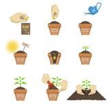 种植种子序列 免版税库存照片