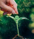 种植种子的手 免版税库存图片