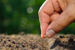 种植种子 免版税库存照片