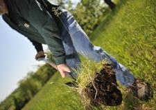 种植结构树的人 免版税库存照片