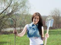 种植结构树的女性花匠 免版税图库摄影
