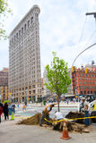 种植结构树的nyc 库存照片