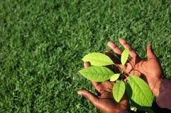 种植结构树 免版税库存图片