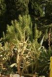 种植绿叶 免版税图库摄影
