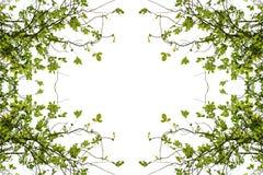 种植背景,绿色叶子,树背景分支  库存照片