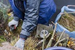 种植花圃的妇女 免版税库存照片