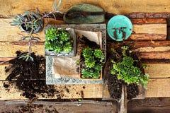 种植花在庭院围场 免版税库存照片