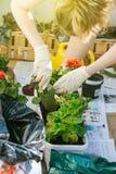 种植花的妇女在阳台 免版税库存照片