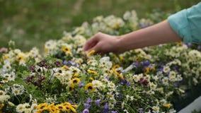 种植花的花匠手在后院 股票录像