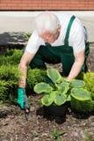 种植花的花匠 免版税库存图片