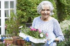 种植花的资深妇女画象在庭院里 库存图片